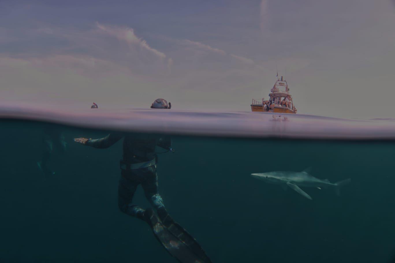 shark freedivers